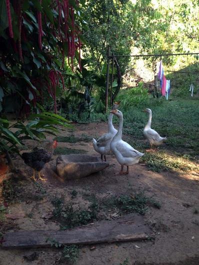 Ni a las gallinas ni a los gansos les importa el patrimonio arqueológico